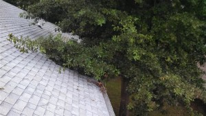 tree service roof clearance