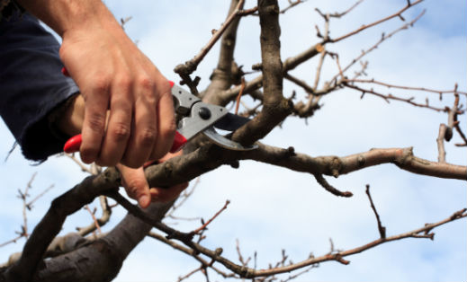 When Should You Trim Your Trees and Shrubs?