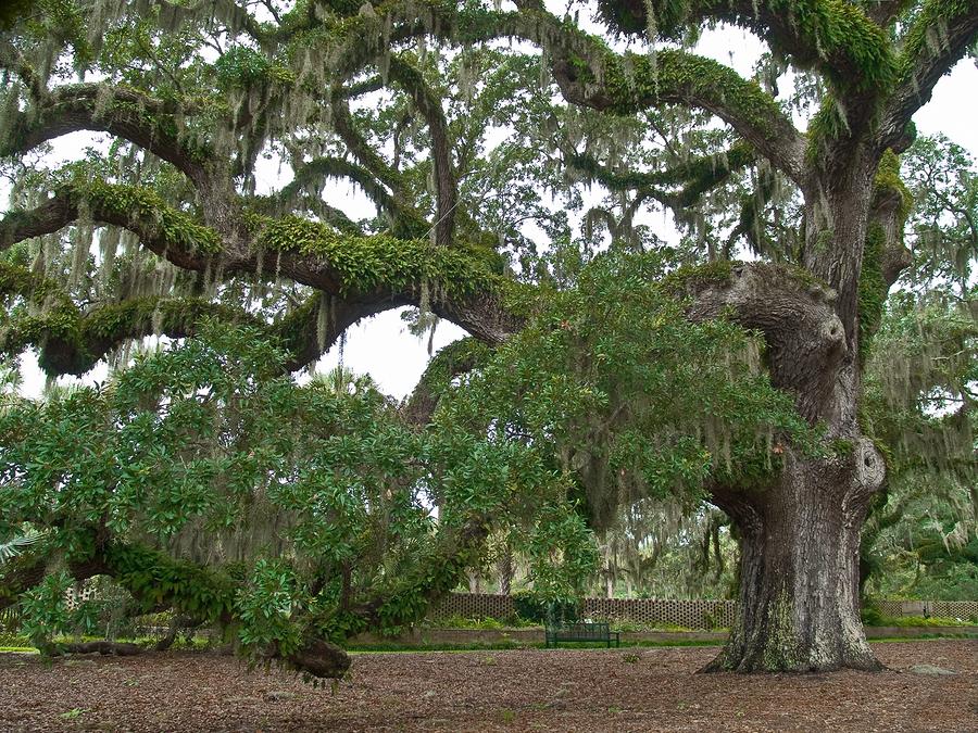 Austin Tree Service Inc